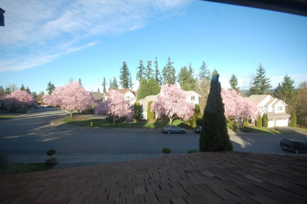 Spring in Redmond