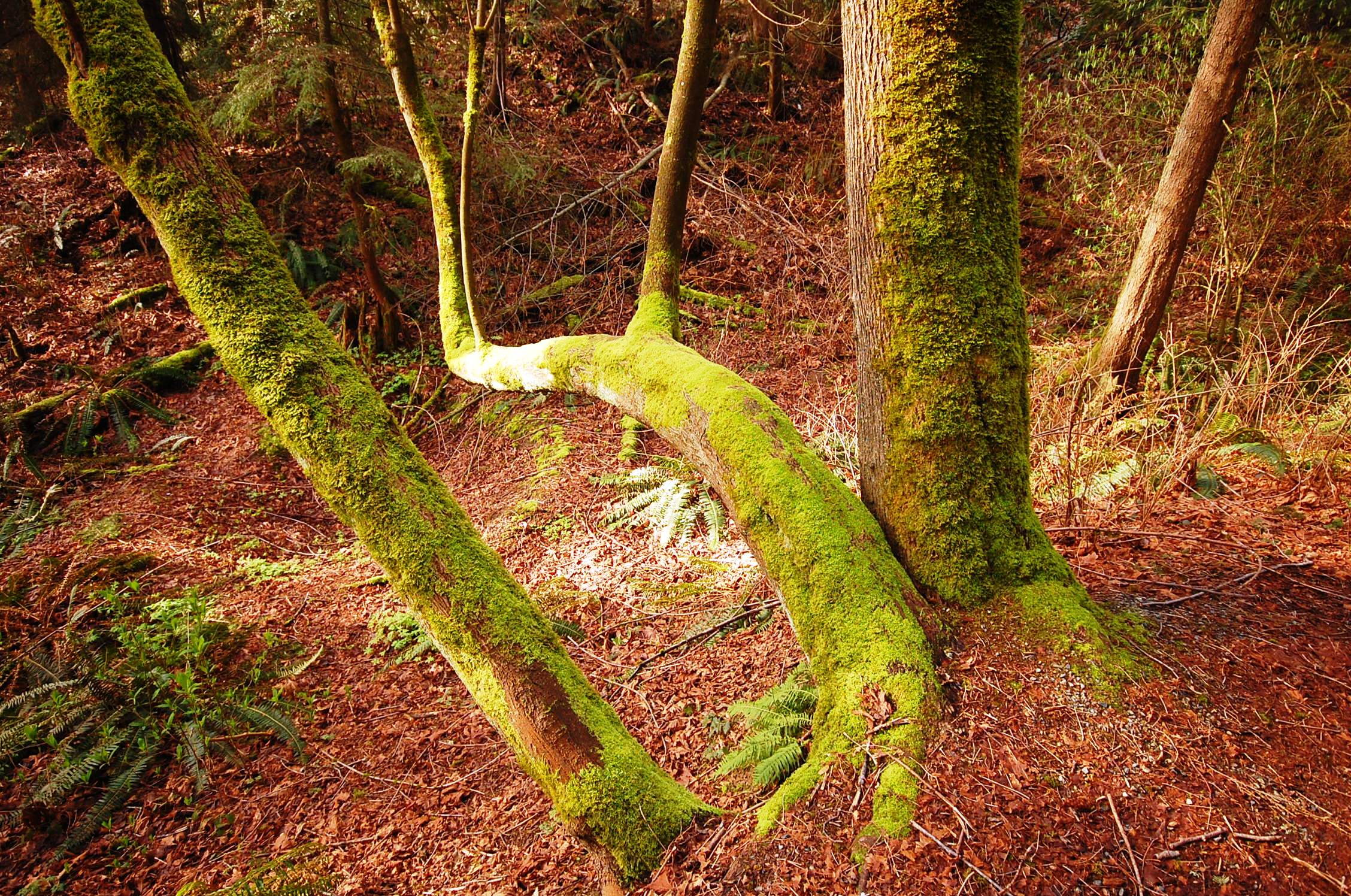 Spring sun filtering through the woods onto a moss covered tree trunk